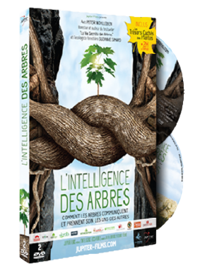 dvd l'intelligence des arbres