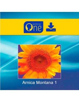 cd arnica montana 1