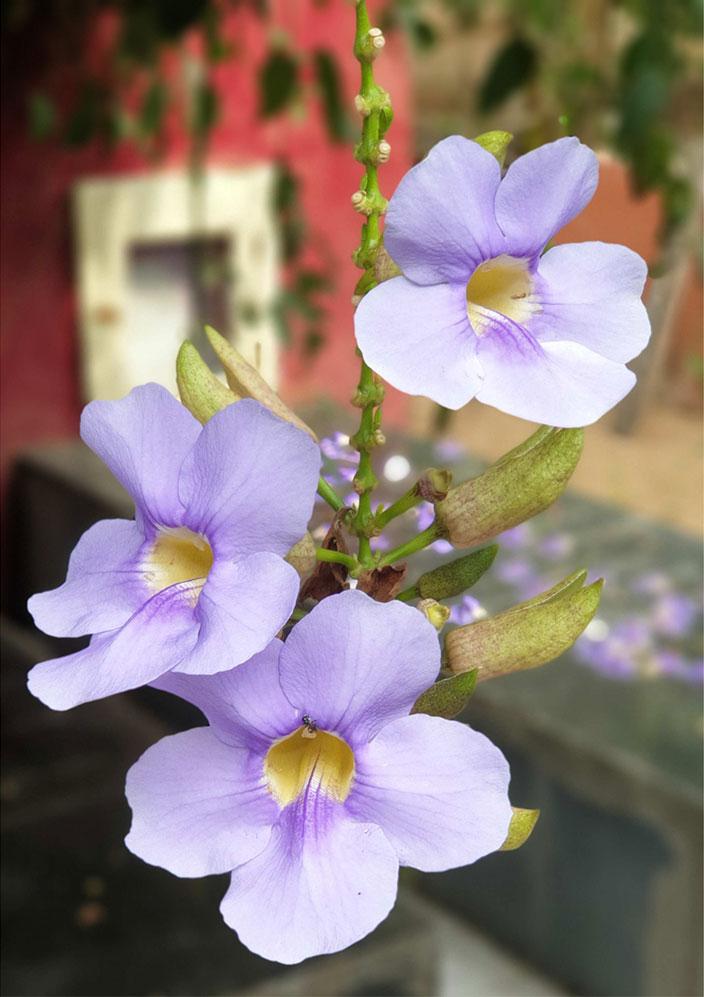 fleur-lourex.jpg